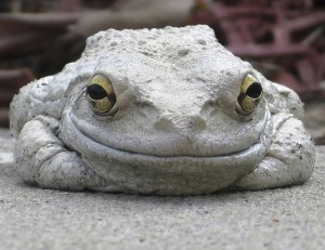frog-smiling-gray